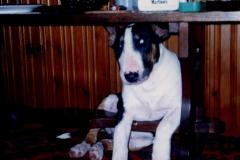 Pets012